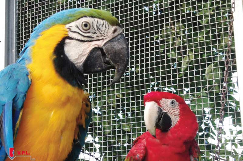 voliera pappagalli auralia