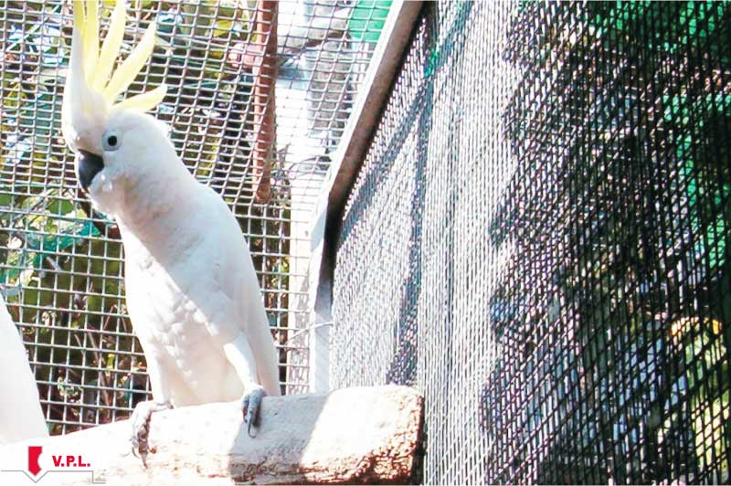 gabbia per pappagalli cacatua