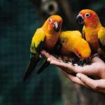 gabbia per uccelli esotici