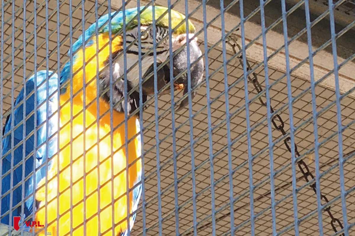 gabbia per uccelli di taglia media - pappagallo ararauna