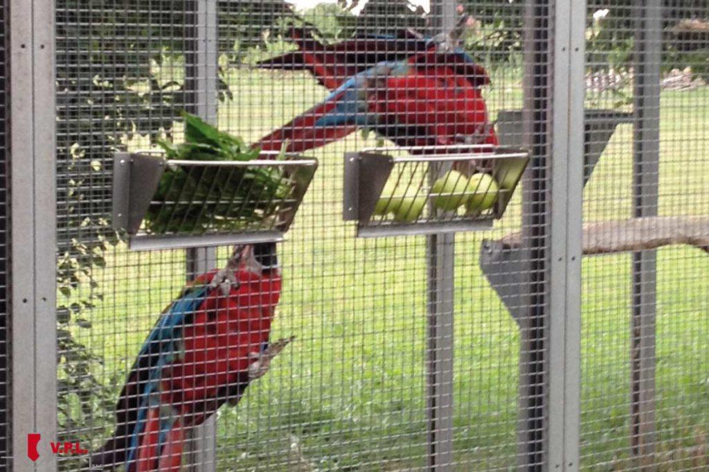 Portafrutta per dare ai pappagalli frutta e frutta sempre presca
