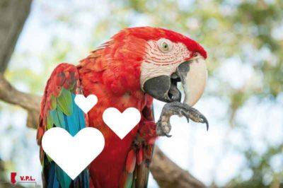 Proteggere il papagallo